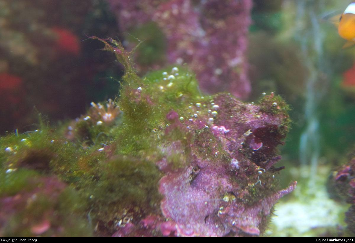 Fish tank forum view topic algae problem for What causes algae in fish tanks