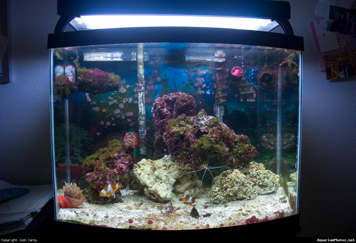 Fish tank forum view topic my 30 gallon sw for Fish for a 10 gallon tank